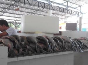 Houve grande oferta de peixe para a semana santa no dia da inauguração do Mercadão
